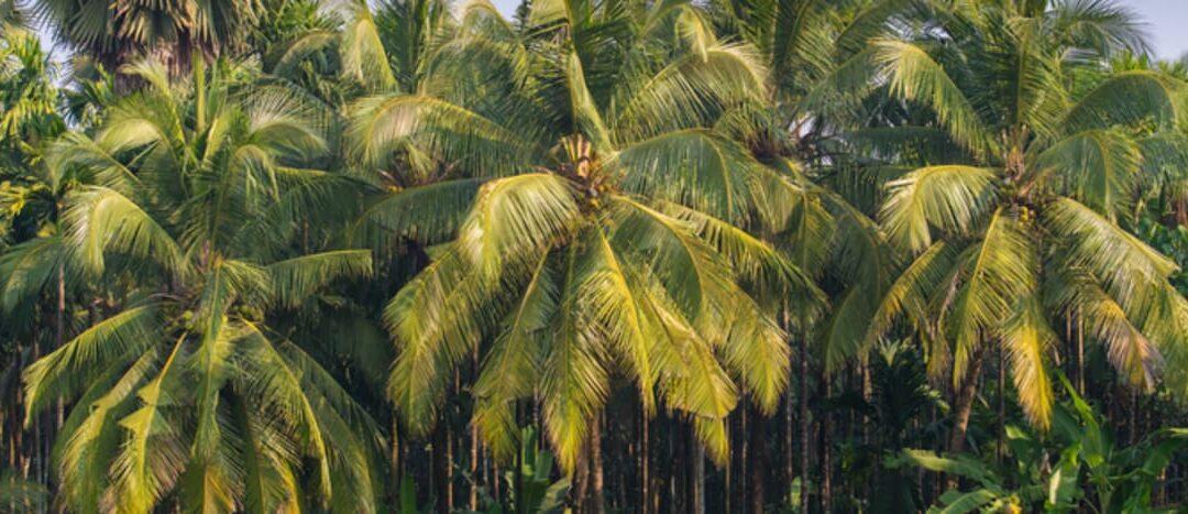 Capstone Partners advised Leslie's Organics on the sale of its Coconut Secret Brand to Nutiva